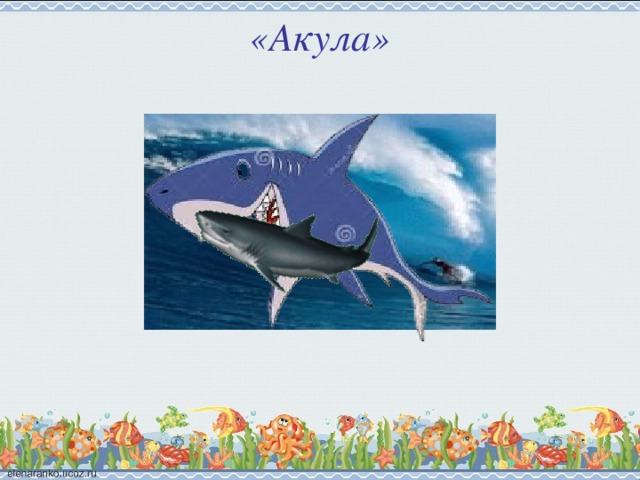 «Акула»