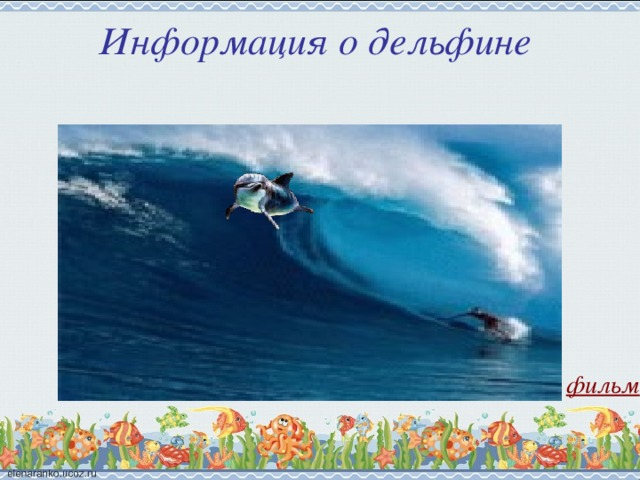 Информация о дельфине