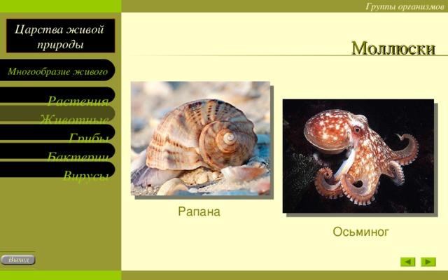 Моллюски Рапана Осьминог