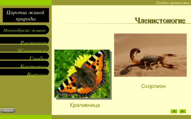 Членистоногие Скорпион Крапивница