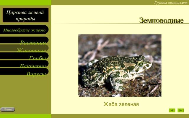 Земноводные Жаба зеленая