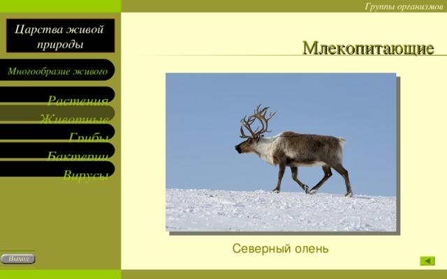 Млекопитающие Северный олень