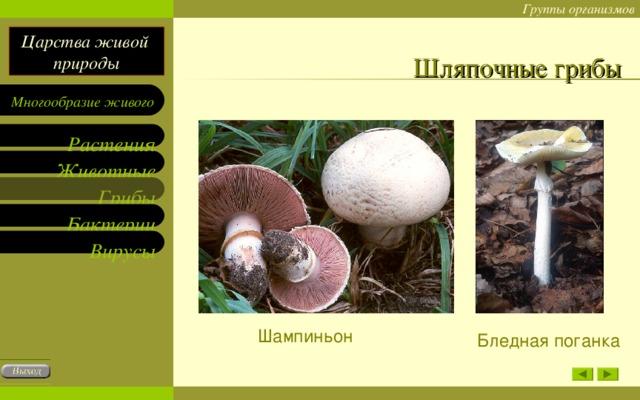 Шляпочные грибы Шампиньон Бледная поганка