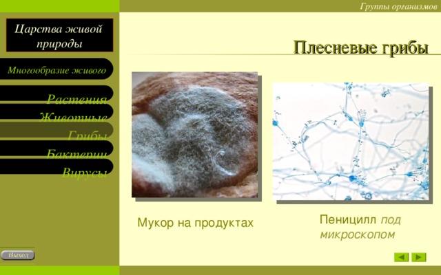 Плесневые грибы Пеницилл под микроскопом Мукор на продуктах