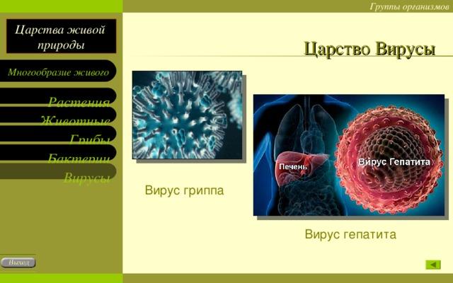 Царство Вирусы Вирус гриппа Вирус гепатита