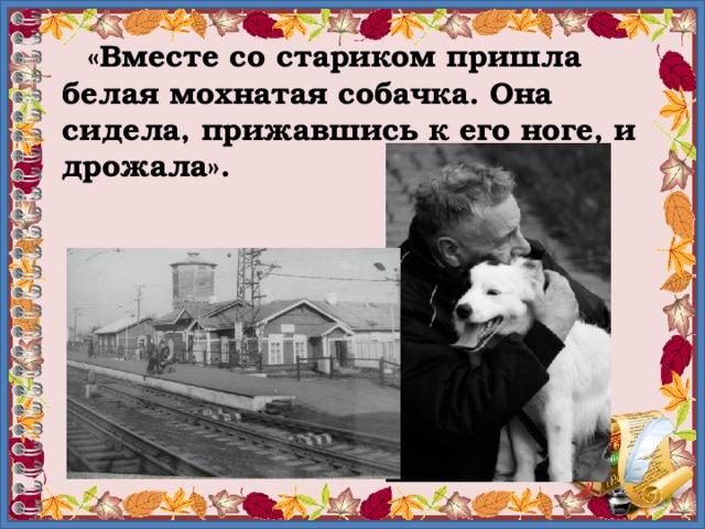«Вместе со стариком пришла белая мохнатая собачка. Она сидела, прижавшись к его ноге, и дрожала».