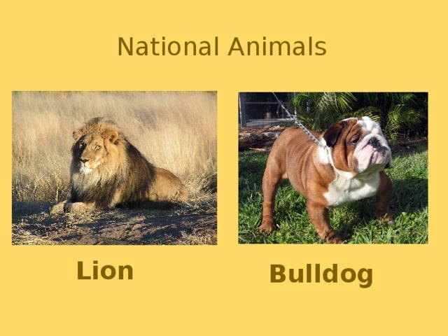 National Animals Lion Bulldog