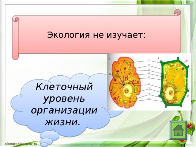 Экология не изучает: Клеточный уровень организации жизни.