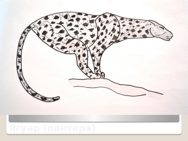 Ягуар (пантера)