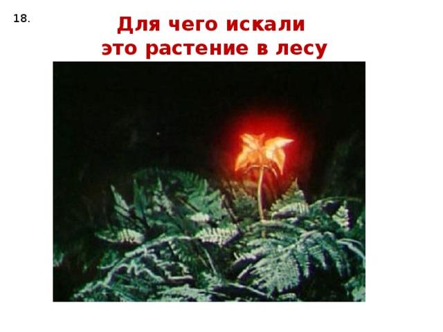 18. Для чего искали это растение в лесу ночью?