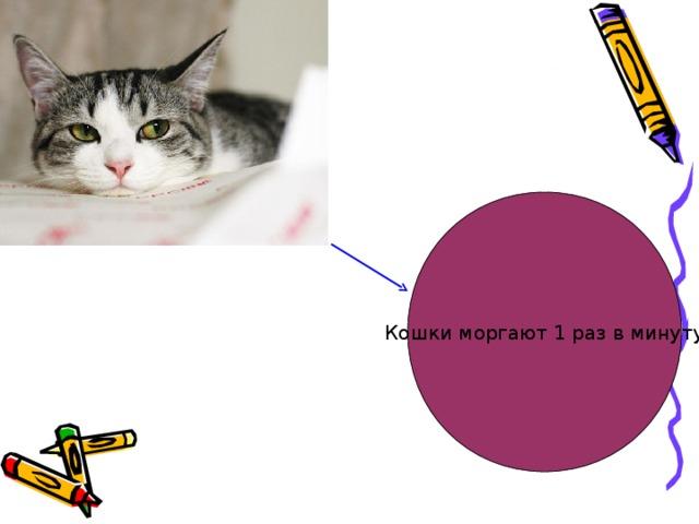 Кошки моргают 1 раз в минуту