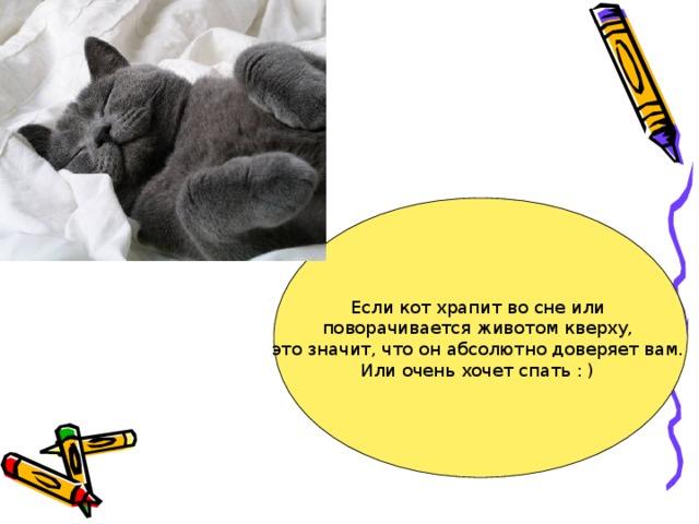 Если кот храпит во сне или поворачивается животом кверху, это значит, что он абсолютно доверяет вам. Или очень хочет спать : )