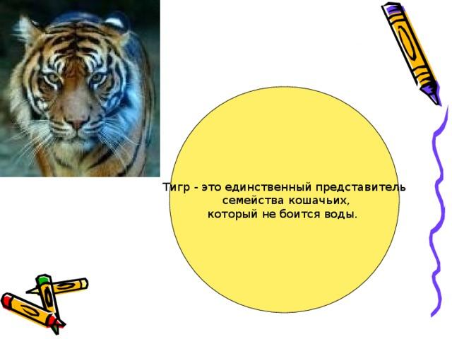 Тигр - это единственный представитель  семейства кошачьих, который не боится воды.