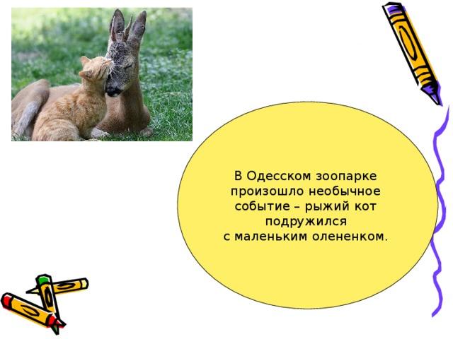 В Одесском зоопарке произошло необычное событие – рыжий кот подружился с маленьким олененком.