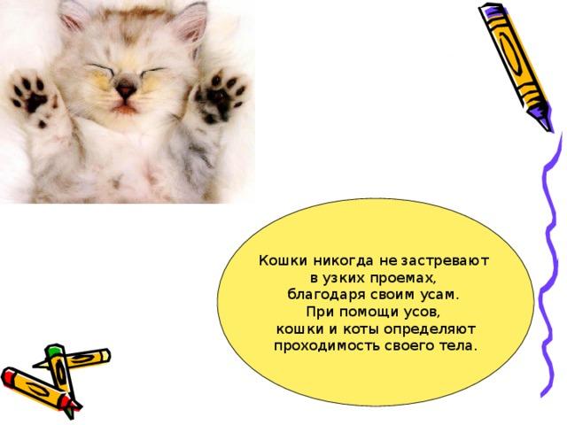 Кошки никогда не застревают в узких проемах, благодаря своим усам. При помощи усов, кошки и коты определяют  проходимость своего тела.