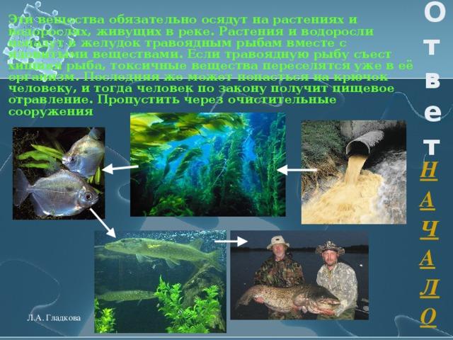 Эти вещества обязательно осядут на растениях и водорослях, живущих в реке. Растения и водоросли попадут в желудок травоядным рыбам вместе с ядовитыми веществами. Если травоядную рыбу съест хищная рыба, токсичные вещества переселятся уже в её организм. Последняя же может попасться на крючок человеку, и тогда человек по закону получит пищевое отравление. Пропустить через очистительные сооружения  Ответ НАЧАЛО Л.А. Гладкова