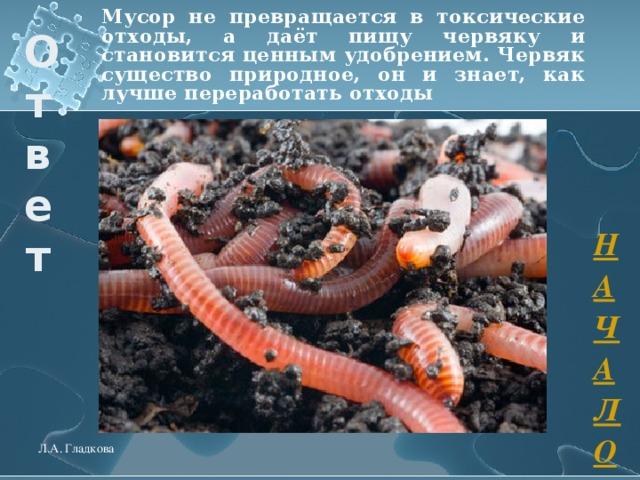 Мусор не превращается в токсические отходы, а даёт пищу червяку и становится ценным удобрением. Червяк существо природное, он и знает, как лучше переработать отходы  Ответ НАЧАЛО Л.А. Гладкова