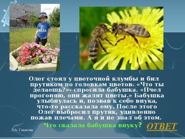 Олег стоял у цветочной клумбы и бил прутиком по головкам цветов. «Что ты делаешь?»- спросила бабушка. «Пчел прогоняю, они жалят цветы.» Бабушка улыбнулась и, позвав к себе внука, что-то рассказала ему. После этого Олег выбросил прутик, удивленно пожав плечами. А я и не знал об этом. Что сказала бабушка внуку ?  ОТВЕТ Л.А. Гладкова