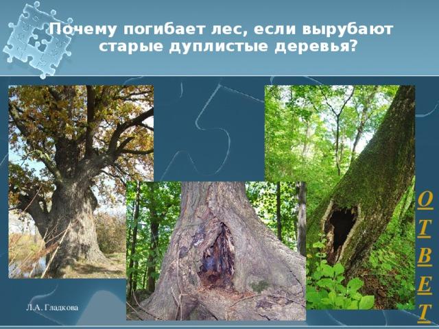 Почему погибает лес, если вырубают старые дуплистые деревья? ОТВЕТ Л.А. Гладкова