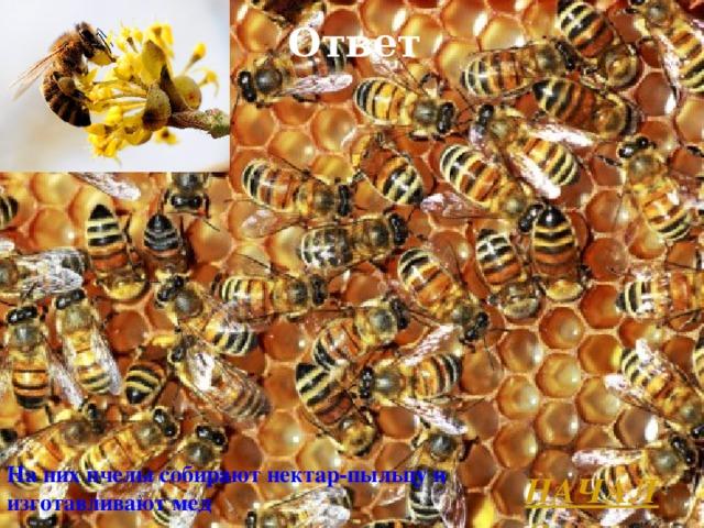 Ответ На них пчелы собирают нектар-пыльцу и изготавливают мед  НАЧАЛО Л.А. Гладкова