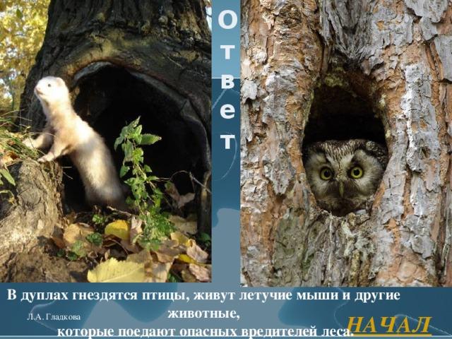 Ответ В дуплах гнездятся птицы, живут летучие мыши и другие животные,  которые поедают опасных вредителей леса. НАЧАЛО Л.А. Гладкова
