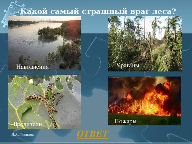 Какой самый страшный враг леса? Ураганы Наводнения Пожары Вредители ОТВЕТ Л.А. Гладкова