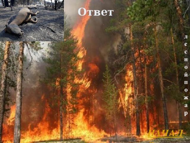 Ответ лесной пожар НАЧАЛО Л.А. Гладкова