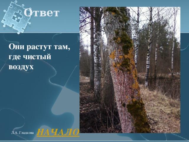 Ответ Они растут там, где чистый воздух  НАЧАЛО Л.А. Гладкова