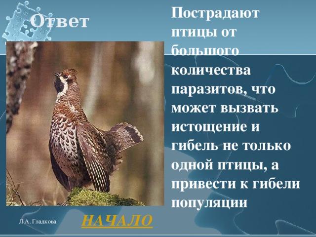 Пострадают птицы от большого количества паразитов, что может вызвать истощение и гибель не только одной птицы, а привести к гибели популяции  Ответ  НАЧАЛО Л.А. Гладкова