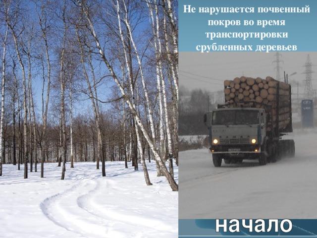 Не нарушается почвенный покров во время транспортировки срубленных деревьев Л.А. Гладкова