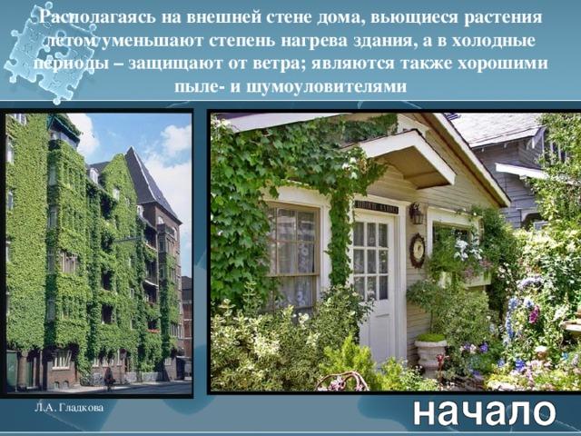 Располагаясь на внешней стене дома, вьющиеся растения летом уменьшают степень нагрева здания, а в холодные периоды – защищают от ветра; являются также хорошими пыле- и шумоуловителями Л.А. Гладкова