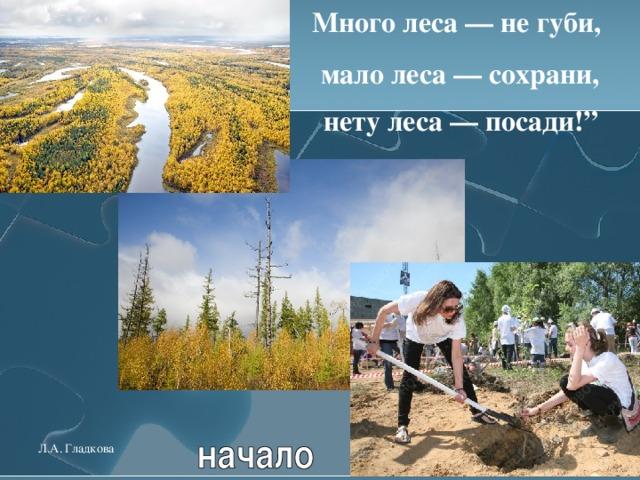 """Много леса — не губи, мало леса — сохрани,  нету леса — посади!""""  Л.А. Гладкова"""