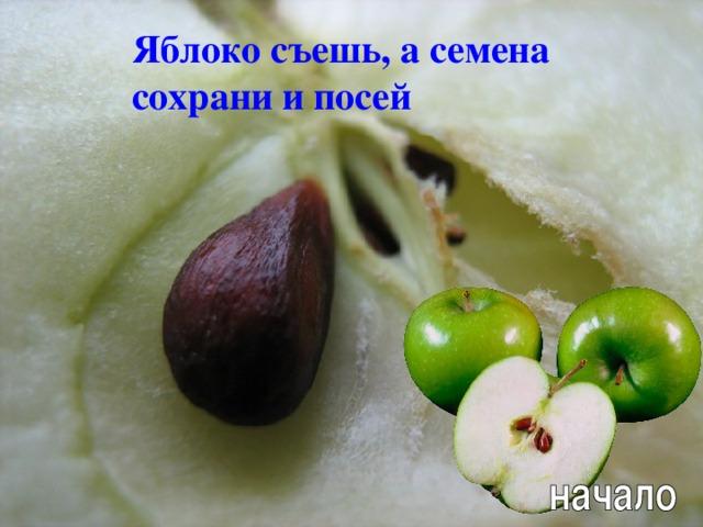 Яблоко съешь, а семена сохрани и посей Л.А. Гладкова