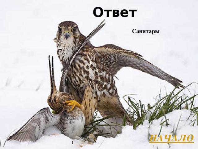 Ответ Санитары НАЧАЛО Л.А. Гладкова