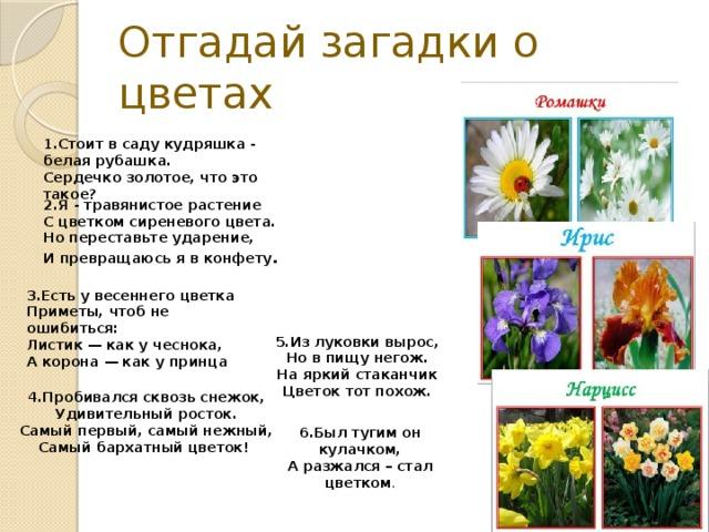 Про букет цветов загадки, цветы