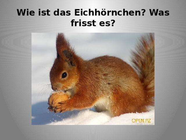 Wie ist das Eichhörnchen? Was frisst es?