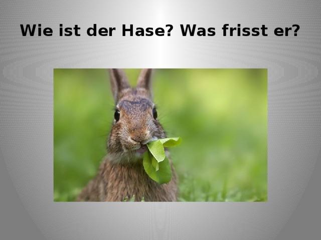 Wie ist der Hase? Was frisst er?
