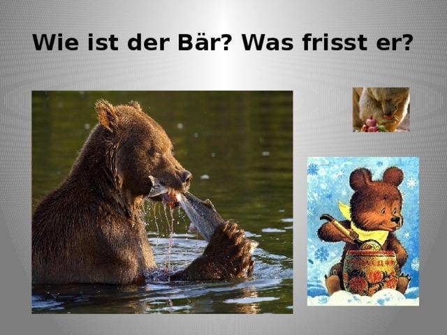 Wie ist der Bär? Was frisst er?