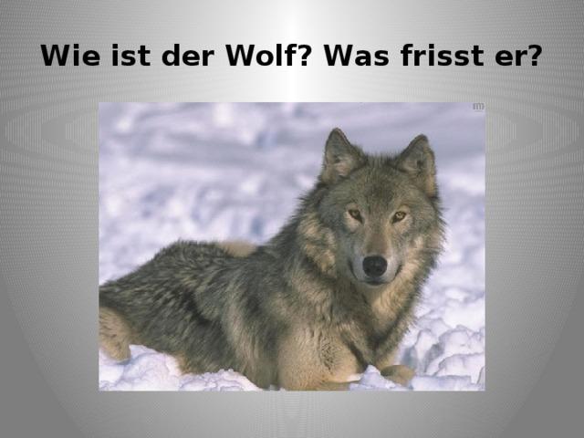 Wie ist der Wolf? Was frisst er?