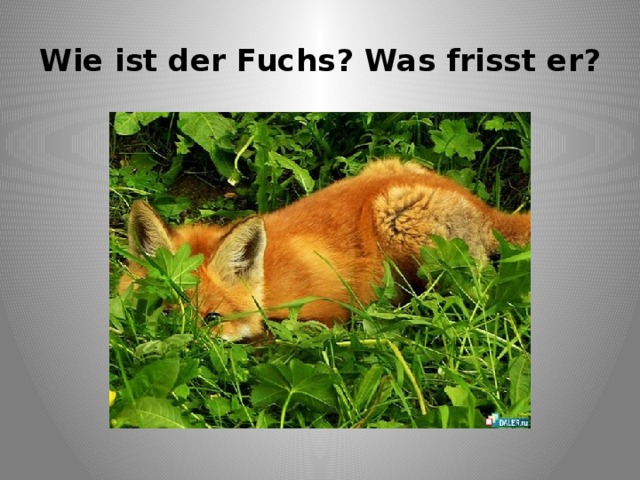 Wie ist der Fuchs? Was frisst er?