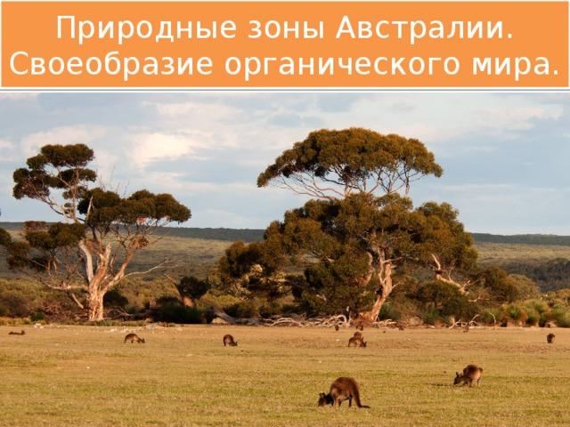 Природные зоны Австралии. Своеобразие органического мира.