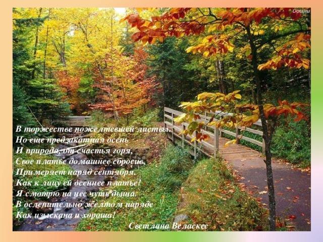 В торжестве пожелтевшей листвы.  Но еще предзакатная осень  И природа, от счастья горя,  Свое платье домашнее сбросив,  Примеряет наряд сентября.  Как к лицу ей осеннее платье!  Я смотрю на нее чуть дыша.  В ослепительно желтом наряде  Как изыскана и хороша!  Светлана Веласкес