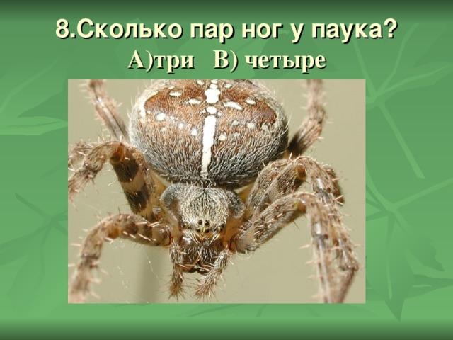 8.Сколько пар ног у паука?  А)три В) четыре