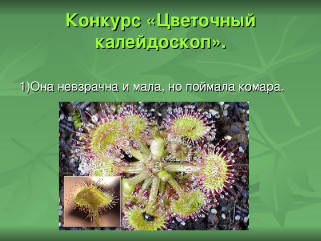 Конкурс «Цветочный калейдоскоп». 1)Она невзрачна и мала, но поймала комара.