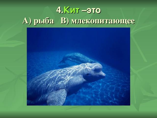 4. Кит –это  А) рыба В) млекопитающее