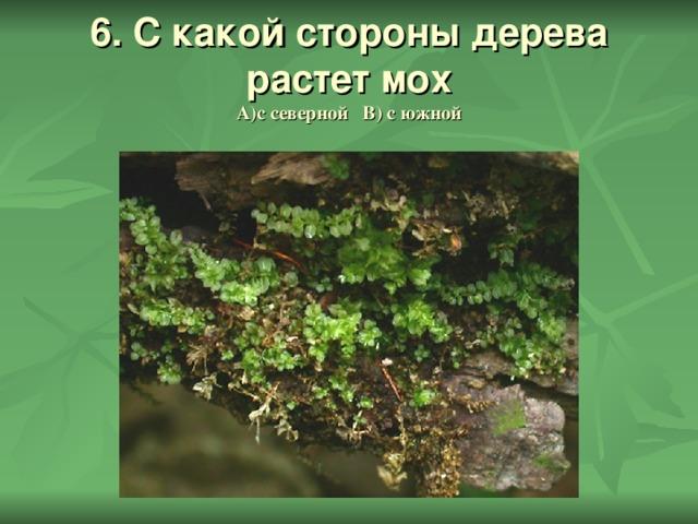 6. С какой стороны дерева растет мох  А)с северной В) с южной