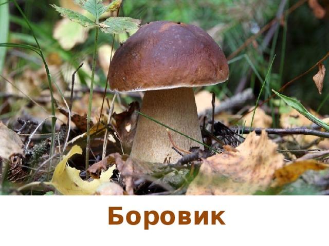 Боровик