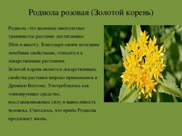 Доклад про растение красной книги 7849