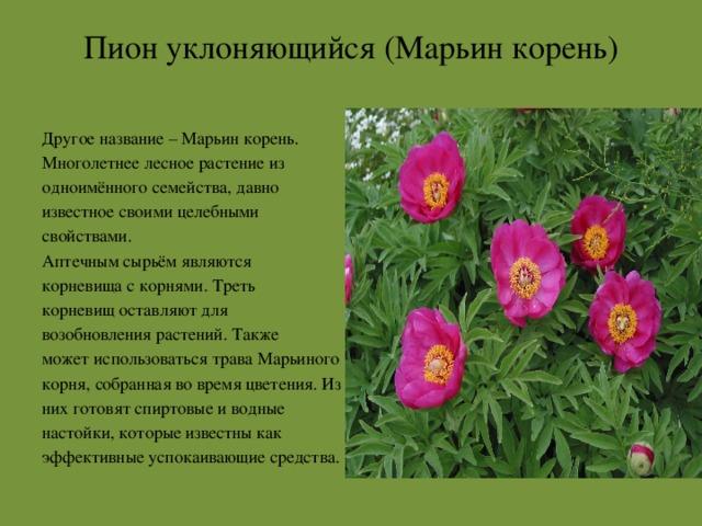 растения красной книги архангельской области фото полагают, что