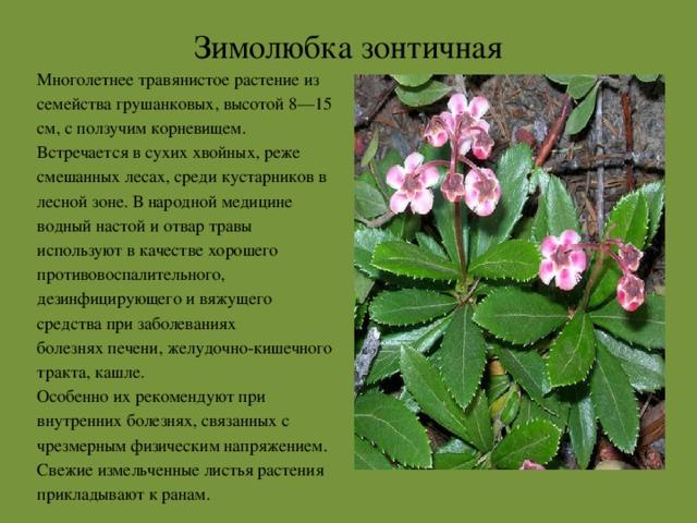 растения красной книги архангельской области фото рассмотрели как снять
